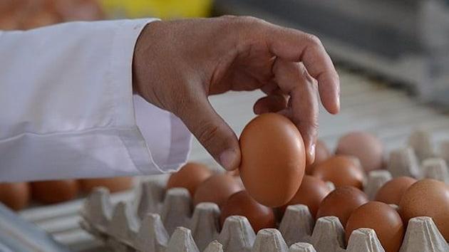 Böcek ilaçlı yumurta krizinin Belçika'ya maliyeti açıklandı