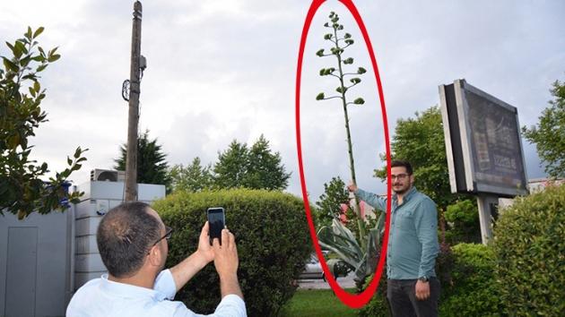 Yer: Ordu… Dikildikten tam 14 yıl sonra çiçek açtı