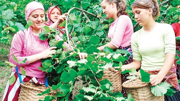 Türkiye dört ürünün üretim ve ihracatında dünya lideri